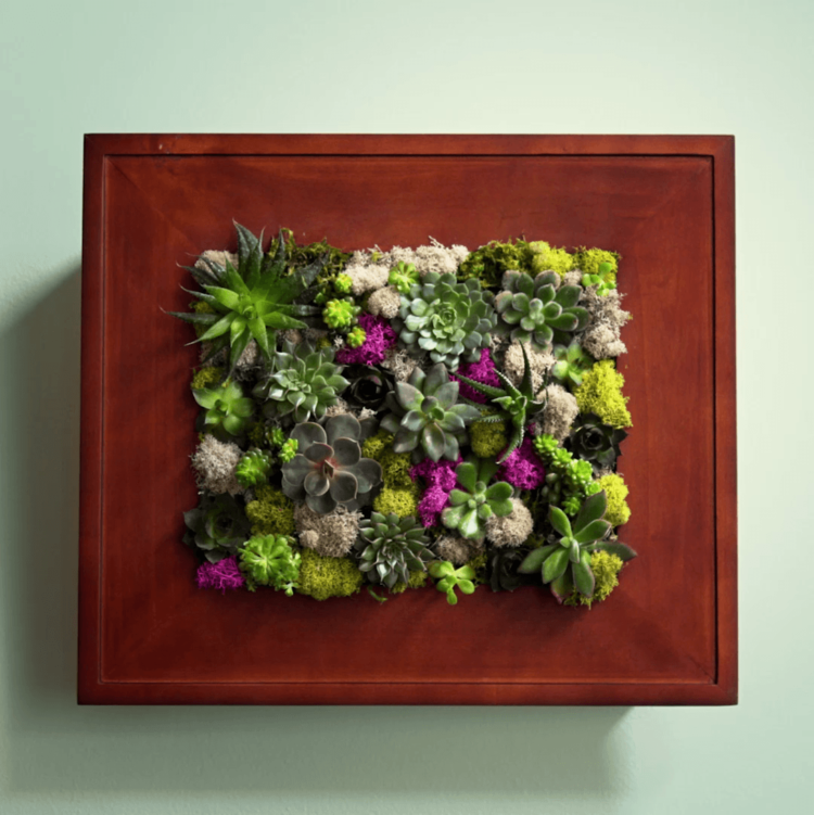 succulent picture frame wall garden