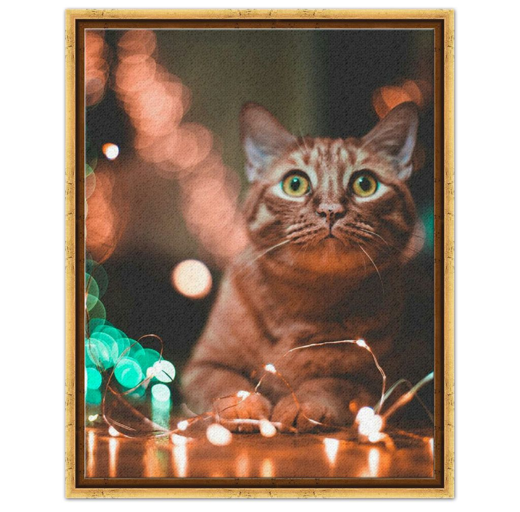 cat with twinkle lights in gold canvas floater frame